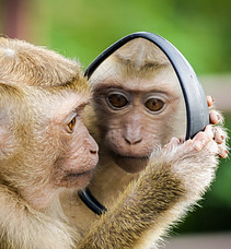 Who Are You As A Leader - looking in mirror