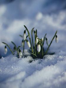 Easter Time New Beginnings - Flower
